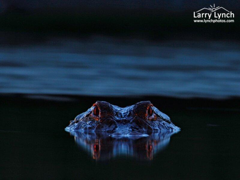 Парень сделал снимок ночного болота и увидел,что был там не один                      Интересное