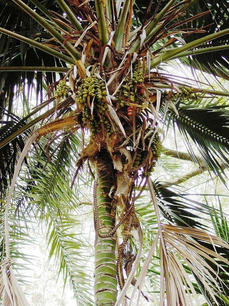 На австралийский остров сбросят тонны крысиного яда-5 фото-
