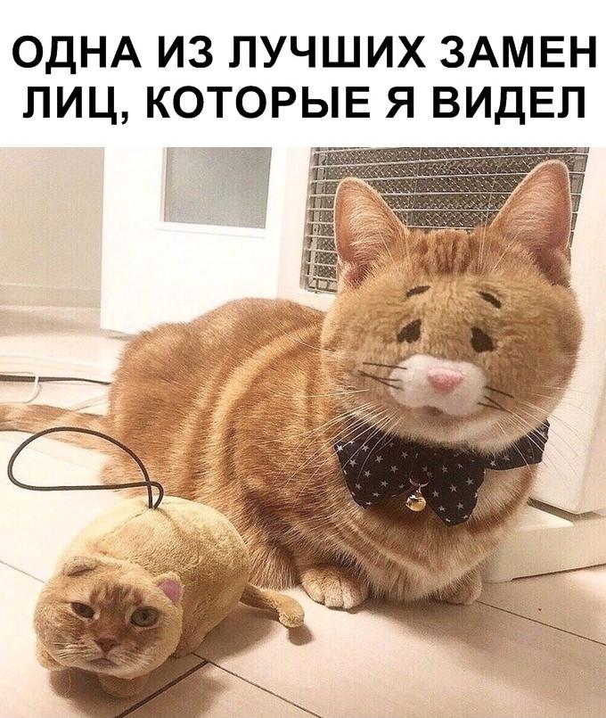 Мемы и картинки на субботу