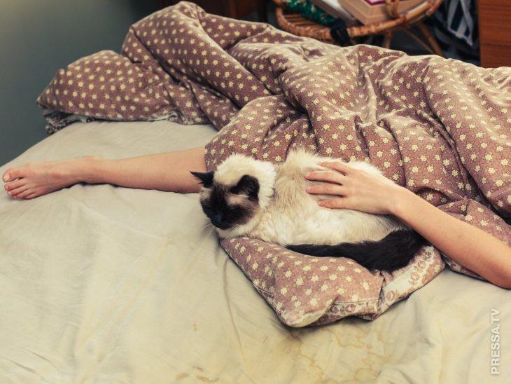 Что может быть ядовито или просто опасно для вашей кошки