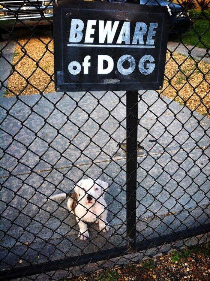 Осторожно, злая собака!
