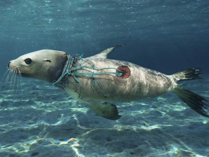 Планета задыхается под пластиком  Интересное