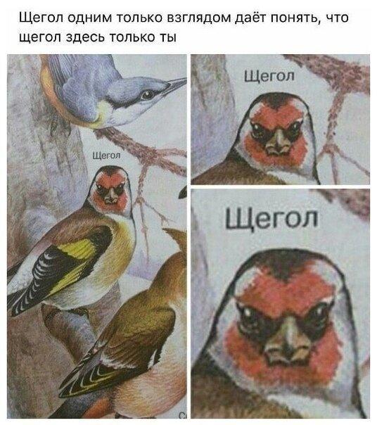 Картинки с надписями                      юмор