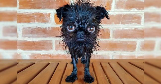 Встречайте Кальмара — собачку, у которой в инстаграме больше подписчиков, чем у некоторых звезд Голливуда Интересное