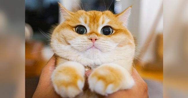 Котик из Нью-Йорка покорил соцсети. Берегитесь: он украдет и ваше сердечко Интересное