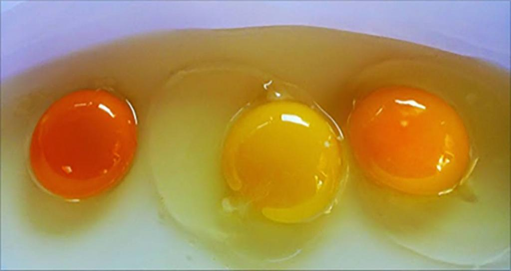 Предпочитаете в яйцах оранжевые желтки? Эксперты выяснили, что фермеры добиваются этого искусственным путем Интересное