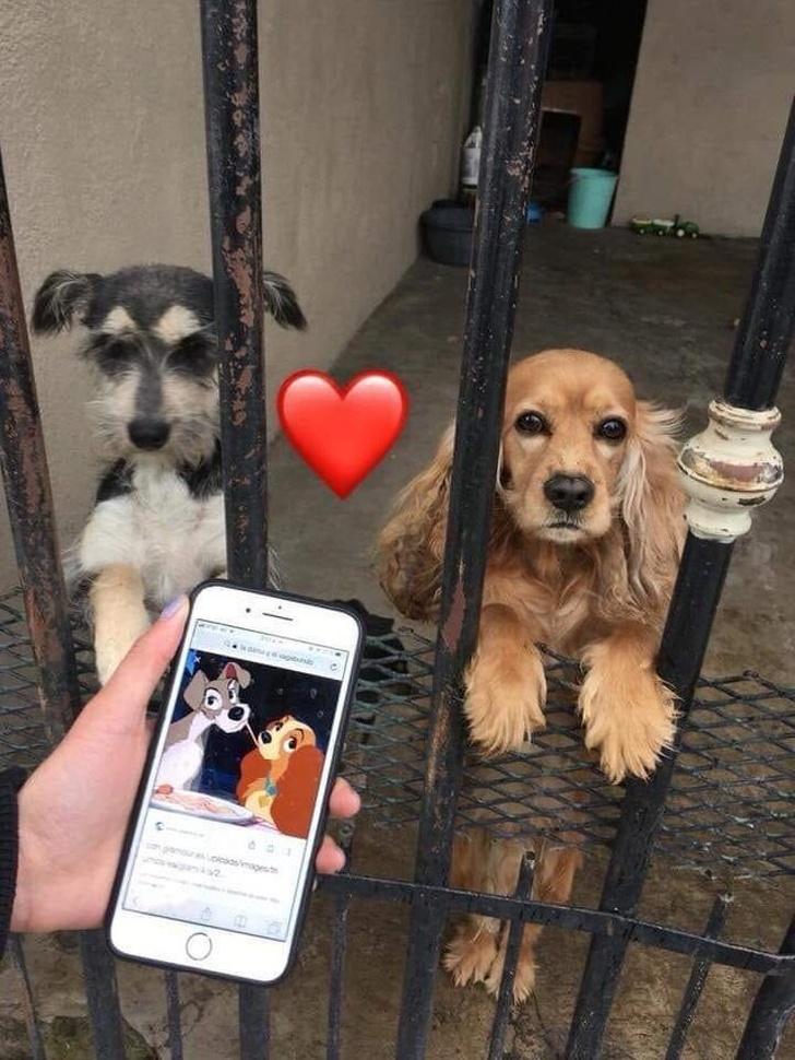 20+ фото собак, которые не стесняются своих странностей Интересное