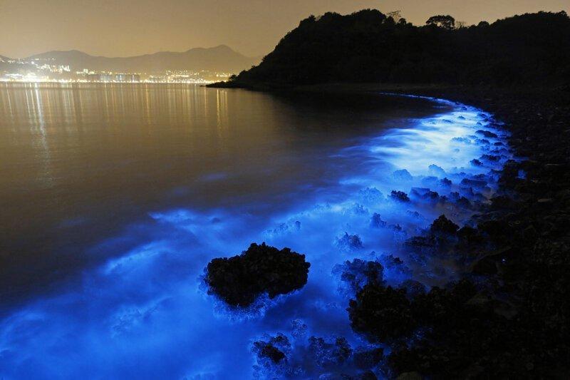 Свечение живых организмов в море Гонконга                      Интересное