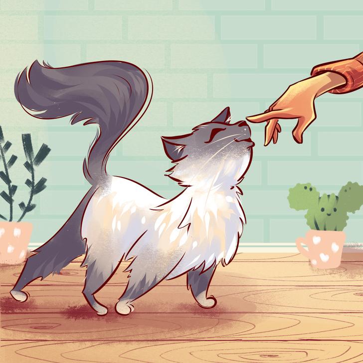 16 ритуалов, которые совершает каждый котовладелец Интересное
