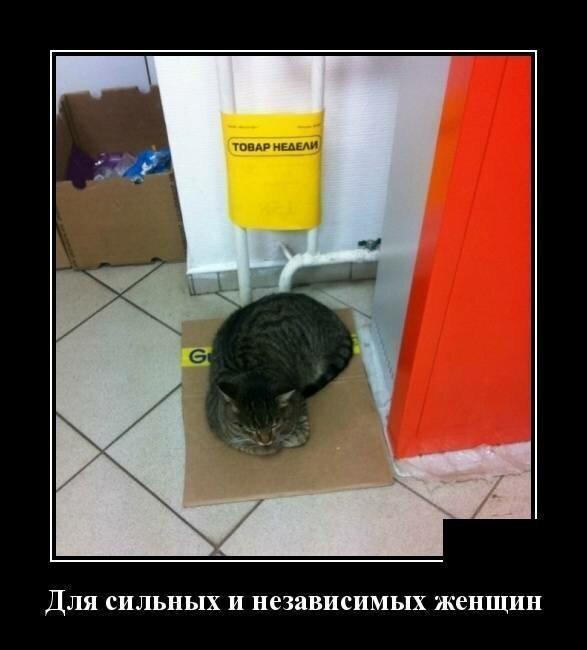 Образ кошки в демотиваторах                      юмор