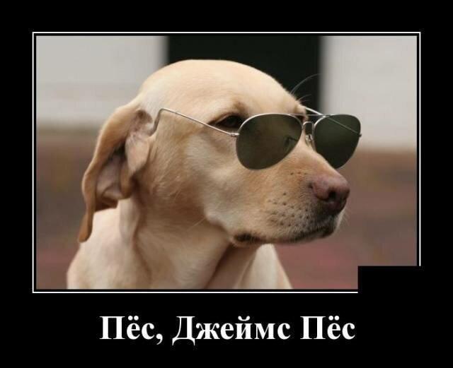 Образ собаки в демотиваторах                      юмор