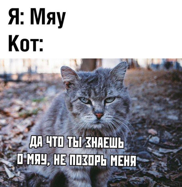 Прикольные и смешные картинки за 09 мая 2019                      Интересное