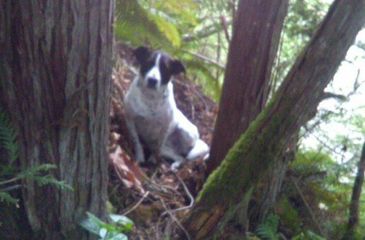 Верный пёс сутки не отходил от тела владельца, упавшего с холма и дождался спасателей                      Интересное