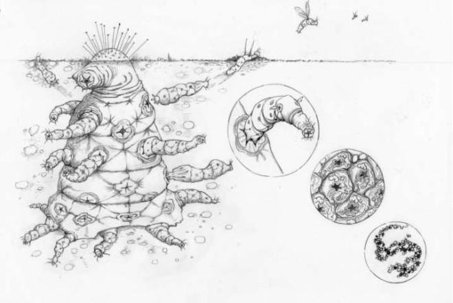 Настоящий вид инопланетян: ученые из Оксфорда показали изображения  Интересное