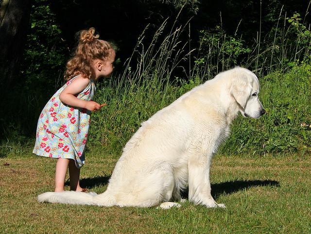 10 лучших пород собак для семьи с детьми (Не самый очевидный выбор)