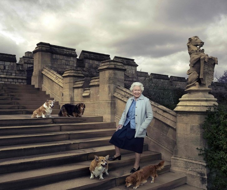 Как выглядит обычный день из жизни королевы Елизаветы II Интересное