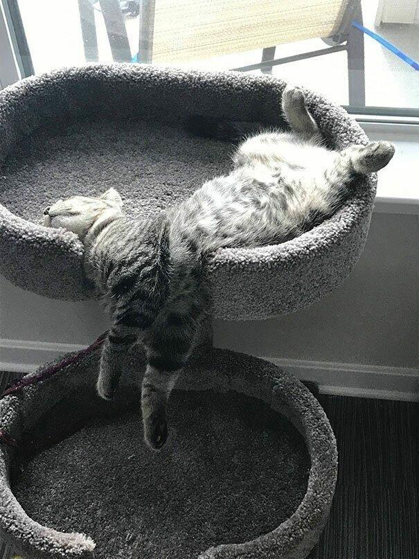 Котейки, уснувшие в самых странных позах-45 фото-