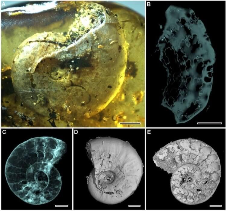 Крохотный фрагмент янтаря хранил останки 40 разных существ миллионы лет -2 фото-