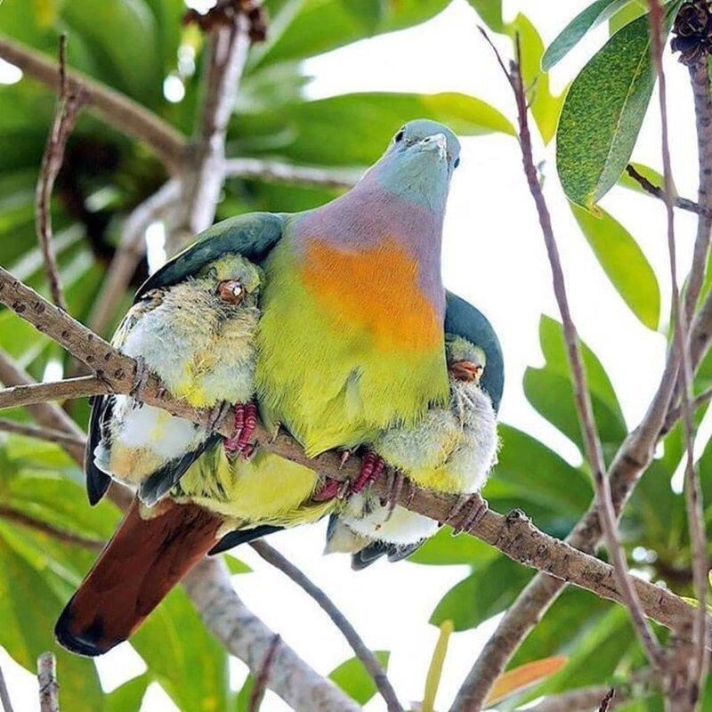 20 случаев, когда птицы были смешнее и харизматичнее всех остальных существ вместе взятых                      Интересное