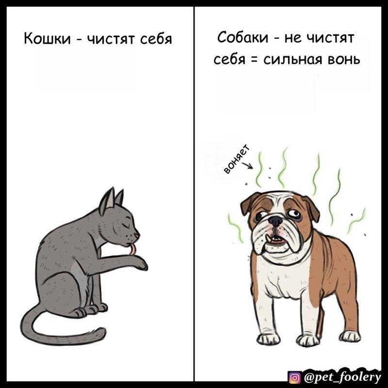 Кошки v/s собак-6 фото-