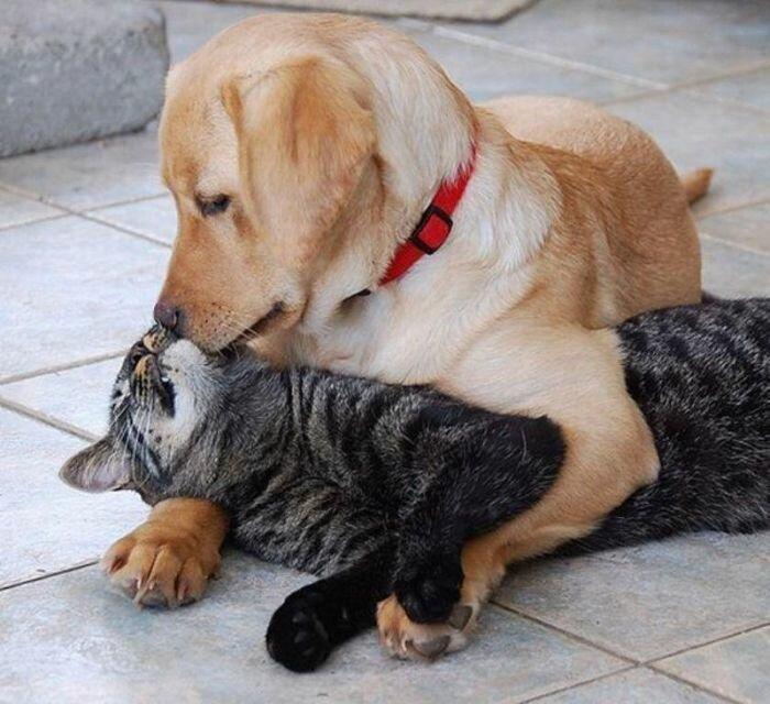 Пост о дружбе от Водяной за 11 мая 2019-36 фото-