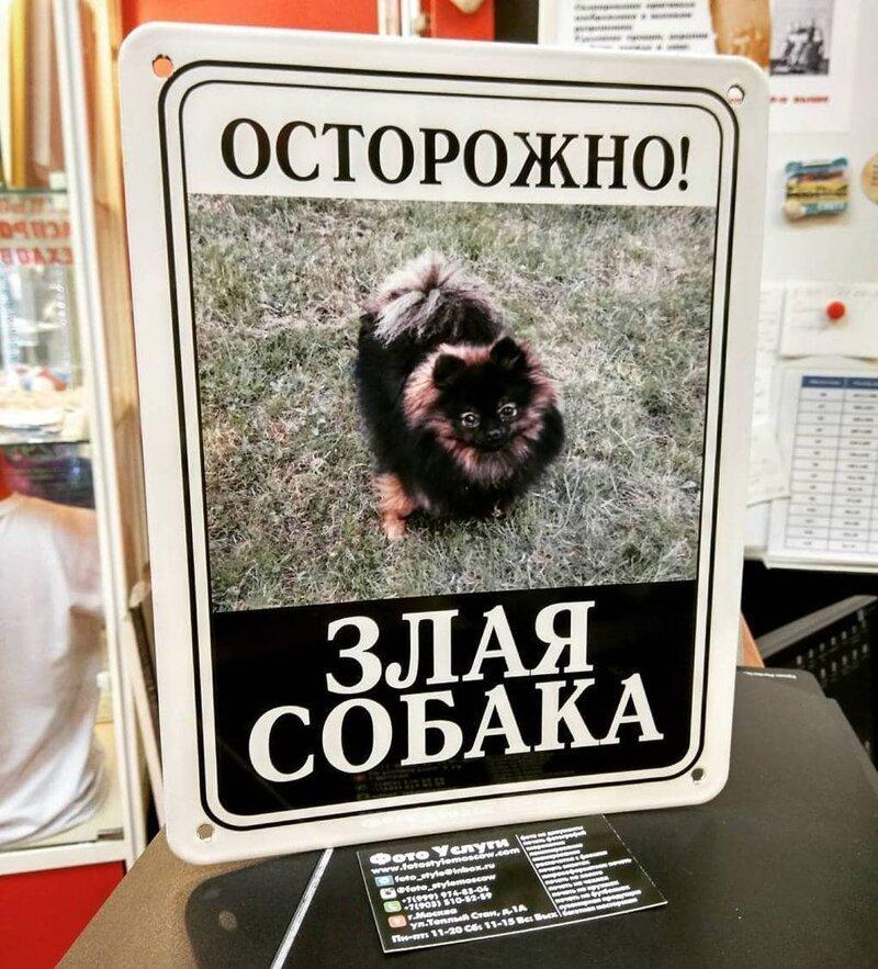 20 ситуаций, когда табличка -Осторожно, злая собака- нагло обманывала всех вокруг-22 фото-
