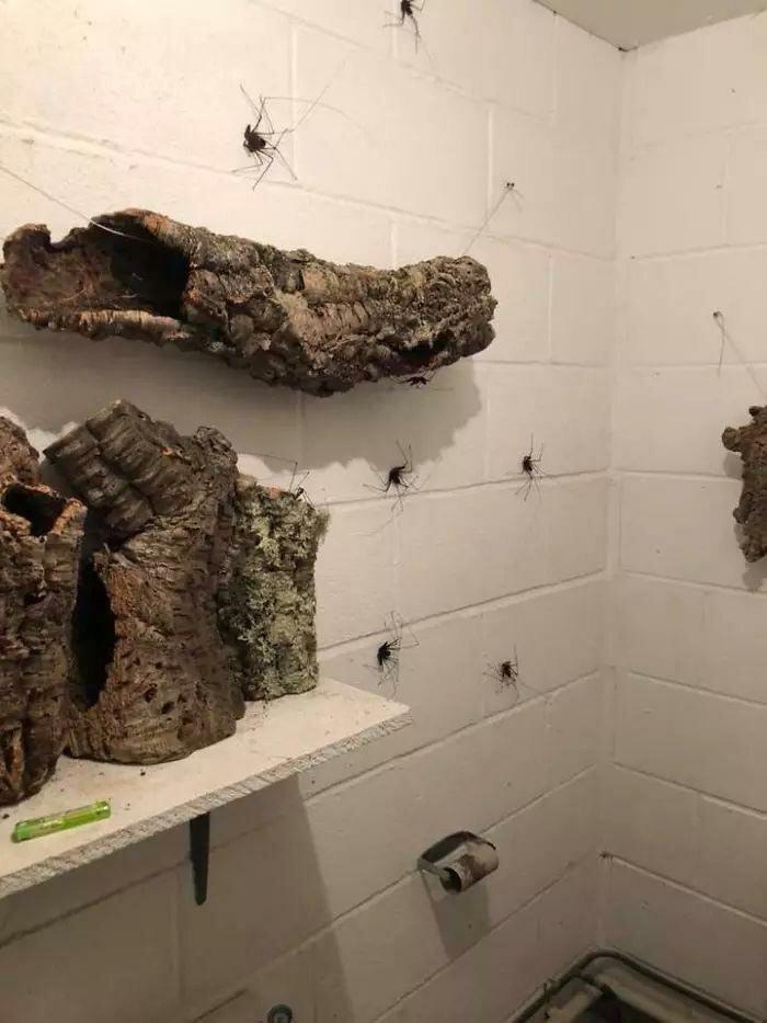 По стенам этого туалета ползают гигантские пауки и это — ад для арахнофобов-6 фото-
