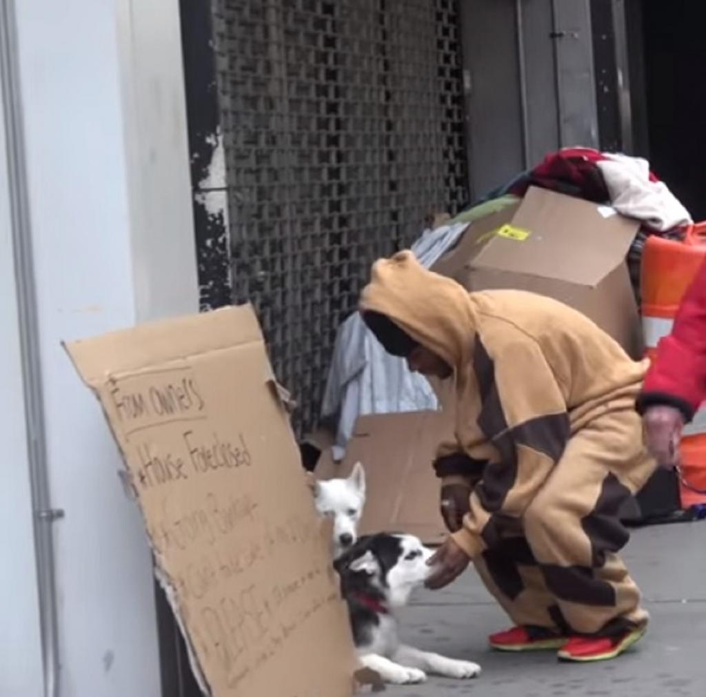 Социальный эксперимент: двух собак хаски оставили на улице с просьбой помочь. Откликнулся только один мужчина