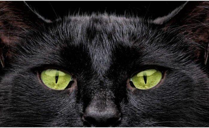 За что котов не любили в Средневековье?-9 фото-