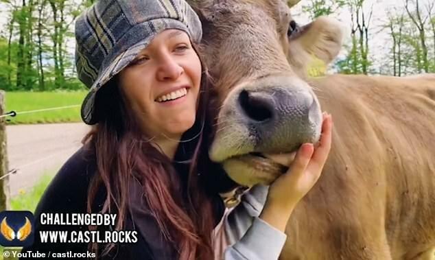 -Люди, не целуйте коров-: австрийские власти бьют тревогу-4 фото + 1 видео-