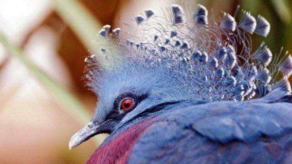 10 малоизвестных и невероятно крупных животных-10 фото-