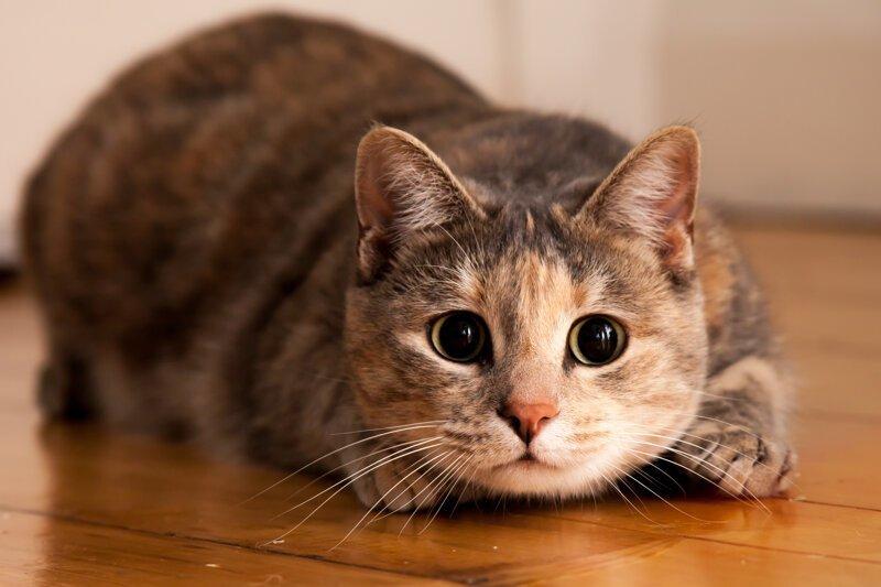 Почему кошку первой пускают в новый дом?-3 фото-