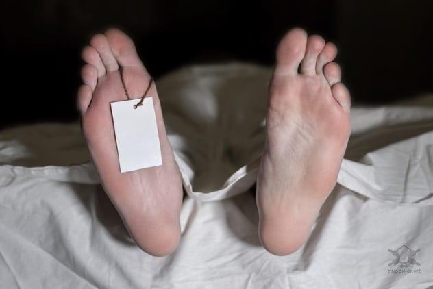 Ответы на странные вопросы о жизни и смерти