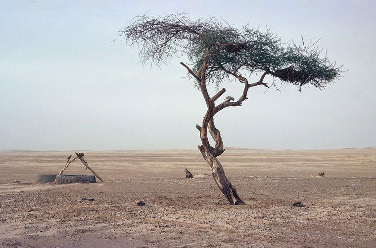 История самого одинокого дерева на земле