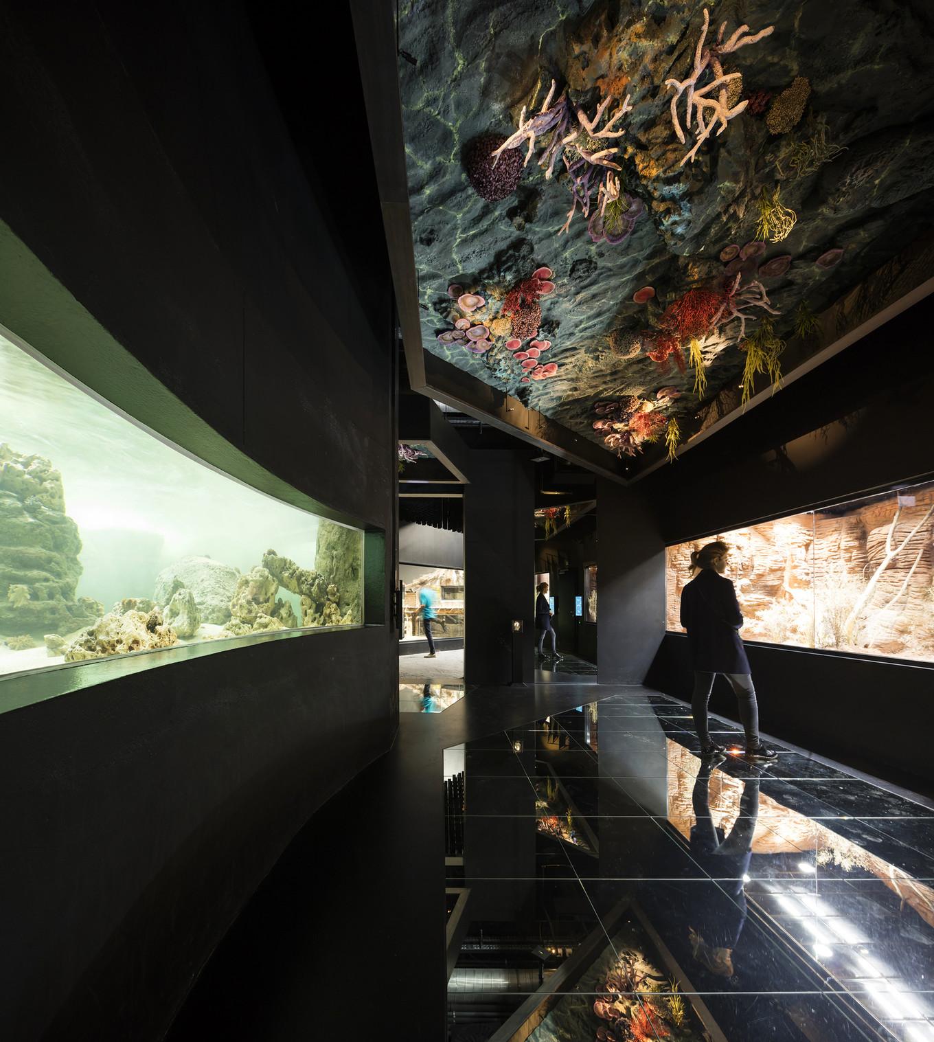 Прогулка по океанариуму Aquatis в Швейцарии