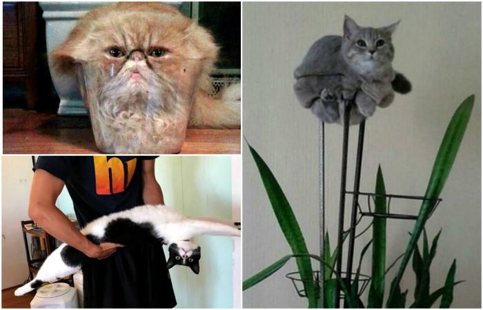 16 потешных снимков с котами, которые будто не от мира сего Интересное