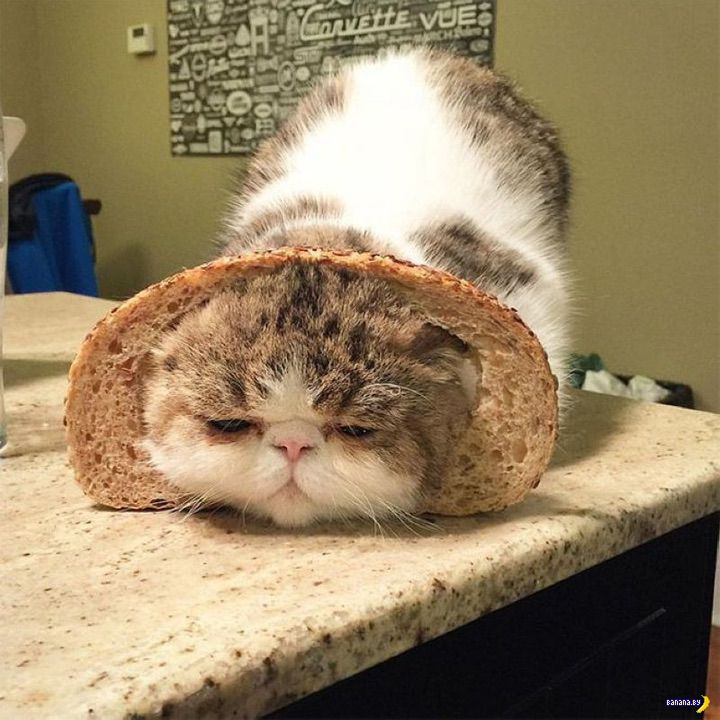 Коты в хлебушке