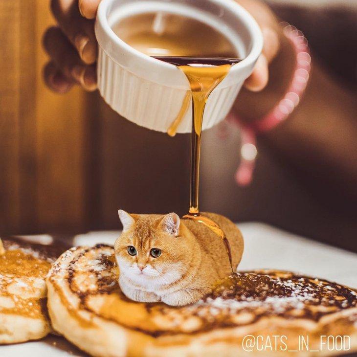 Фантастический фотошоп: кошки и еда вместе