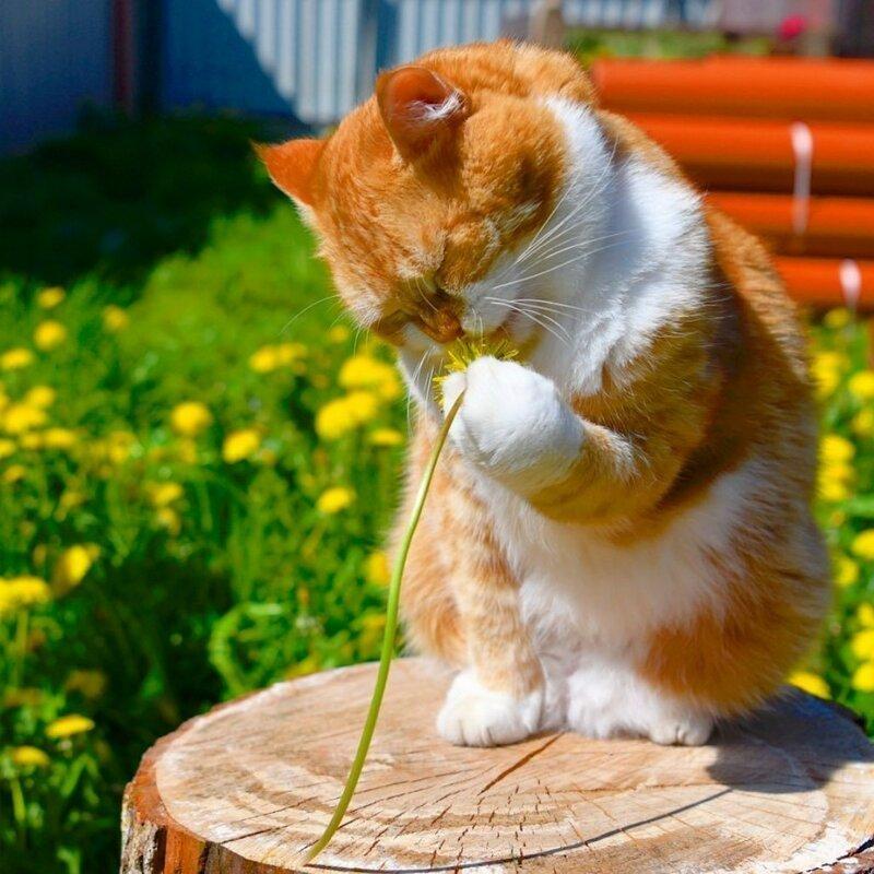 Фолз, картинки с добрым утром с котами веселые