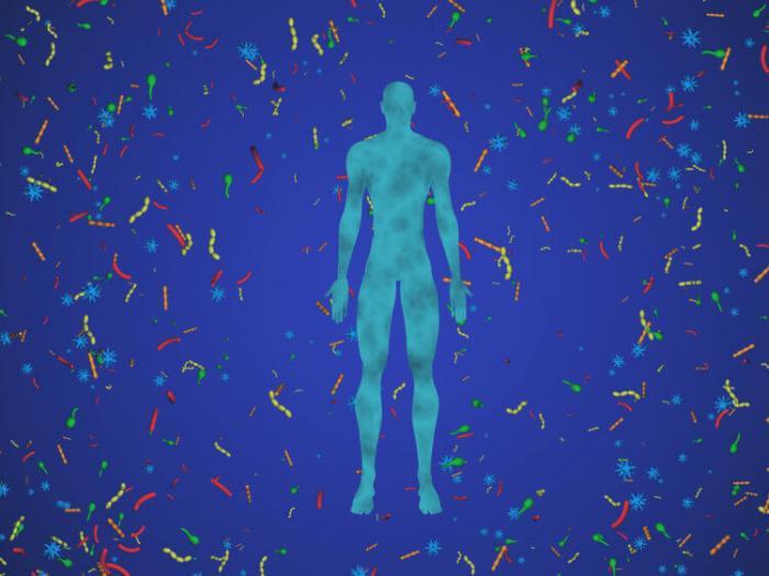Разнообразие кишечной микрофлоры может быть секретом здоровой жизни в пожилом возрасте