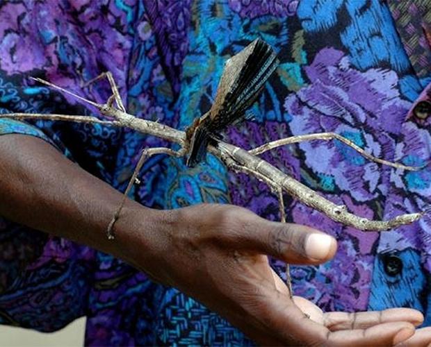 Гигантские жуки нашей планеты -7 фото-