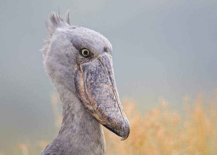 14 фактов о животных, которые удивят даже самых начитанных людей