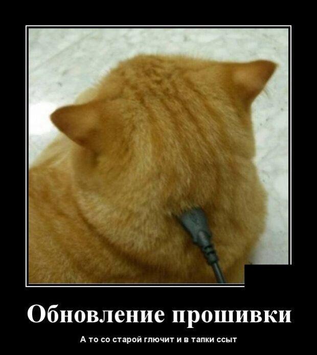 Образ кота в демотиваторах-36 фото-