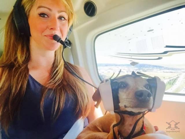 Неожиданные и забавные попутчики в самолете