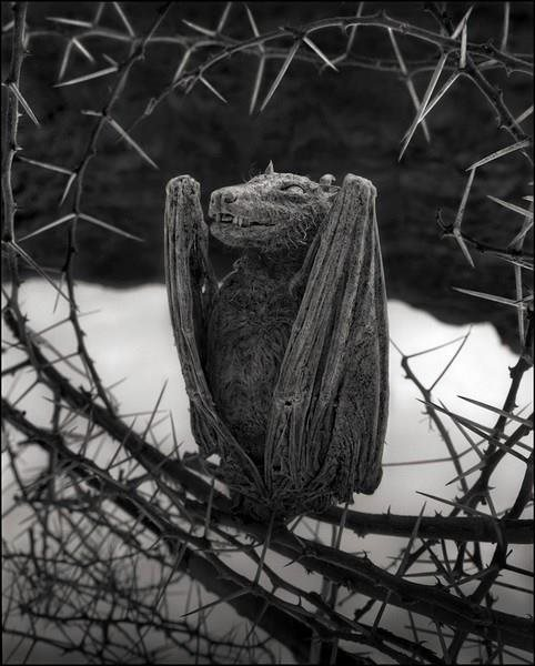 Озеро Натрон превращает животных в каменные статуи