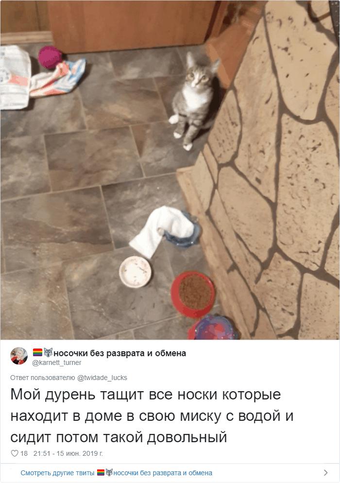 Люди рассказывают, как пьют их коты. И логику этих пушистых паршивцев вам точно не понять-26 фото-