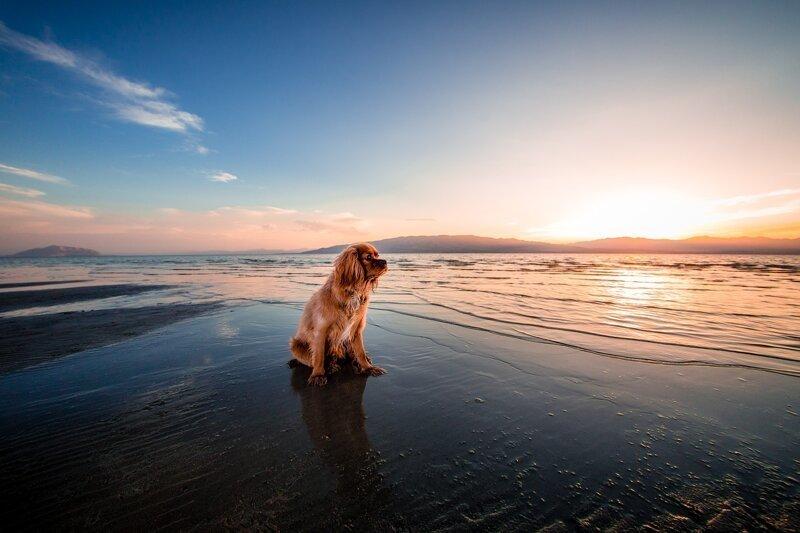8 неприятностей, которые подстерегают отдыхающих на пляже-9 фото-
