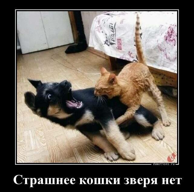 Кошачьи демотиваторы-18 фото-