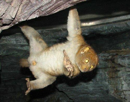 Странные, но эффективные механизмы защиты диких животных-25 фото-