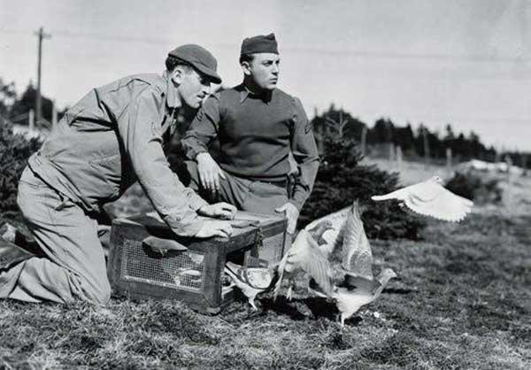 Как голубиная почта использовалась во Второй мировой войне